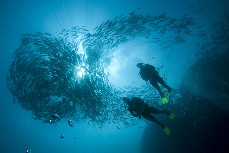 Swirling-Jackfish in malaysia