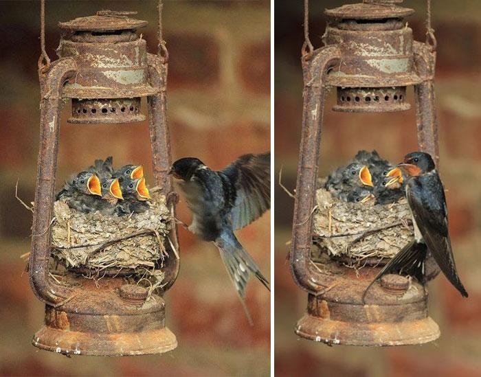 cute-bird-parents-30__700