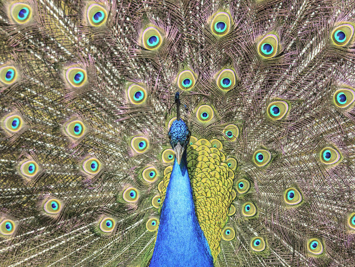 i-lived-in-a-farm-among-horses-and-peacocks-and-captured-these-mythical-animals-7__700