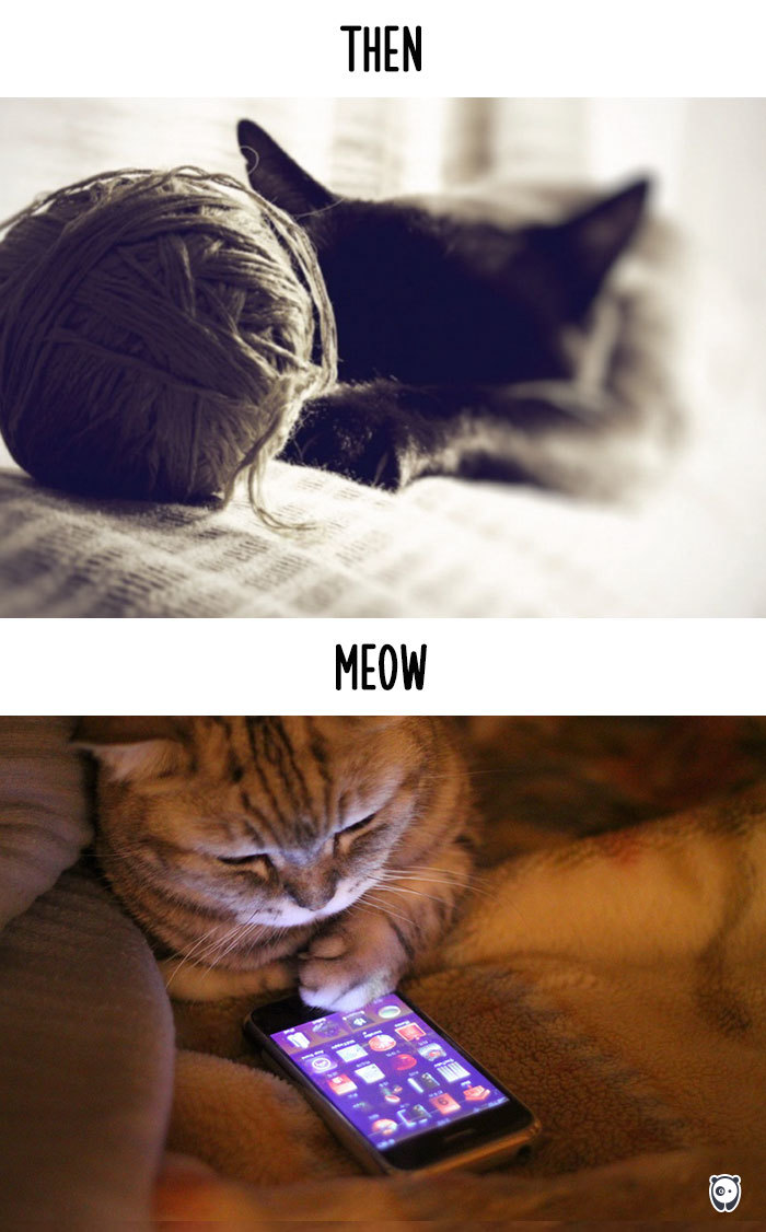cats-then-now-funny-technology-change-life-2-5715f4cf7fd7f__700 (1)