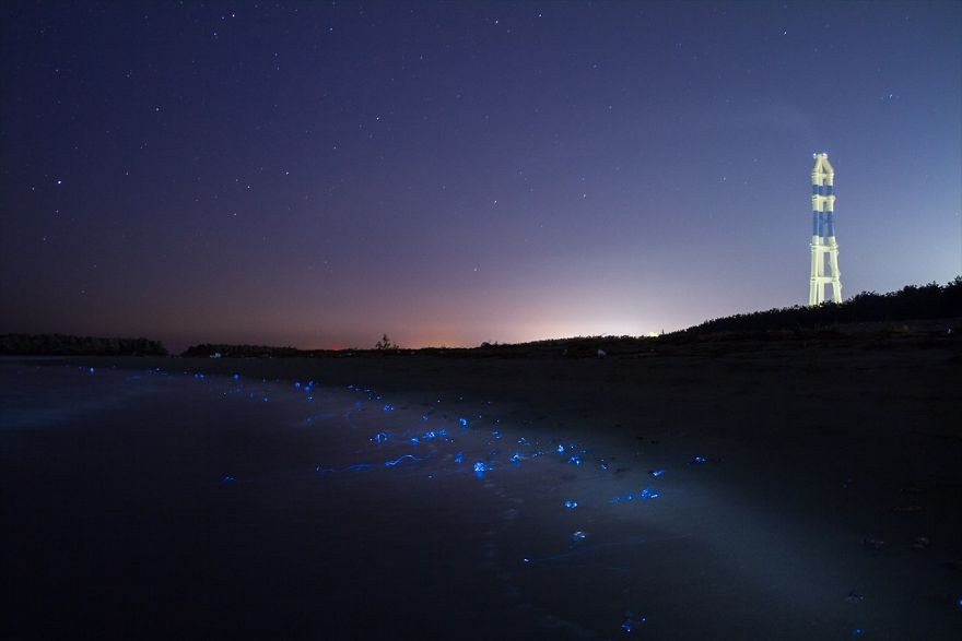i-captured-the-mysterious-glowing-sea-in-japan-3__880