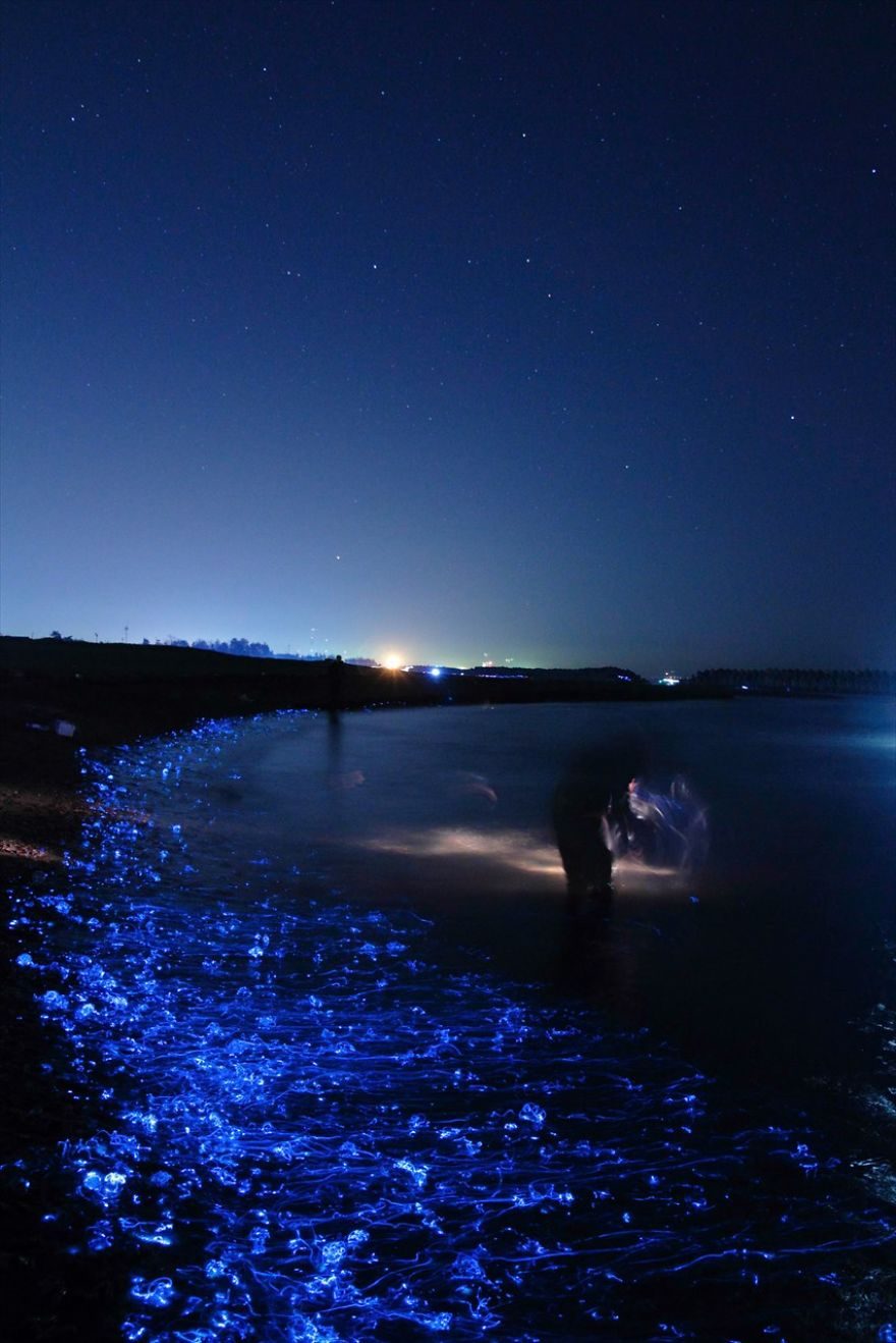 i-captured-the-mysterious-glowing-sea-in-japan__880 (1)
