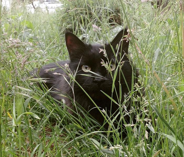 dog-cat-friends-golden-retriever-forsberg-maxwell-3