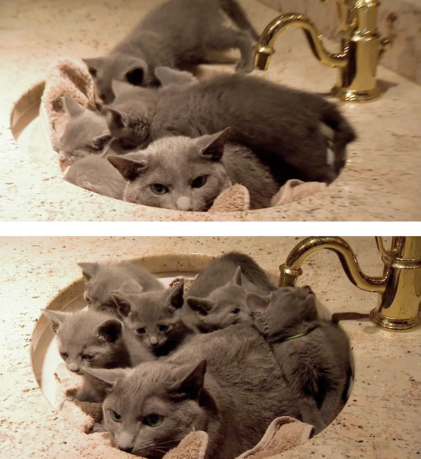funny-animal-motherhood-photos-cats-dogs-pet-moms-17-5767ded9cae95__605