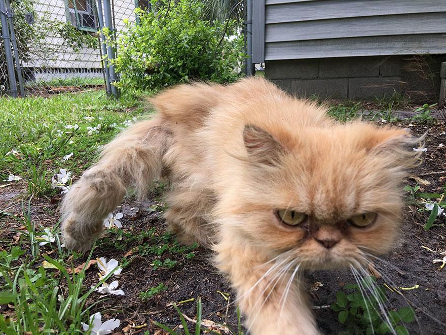 grumpy-cat-adopted-ginger-garfield-1