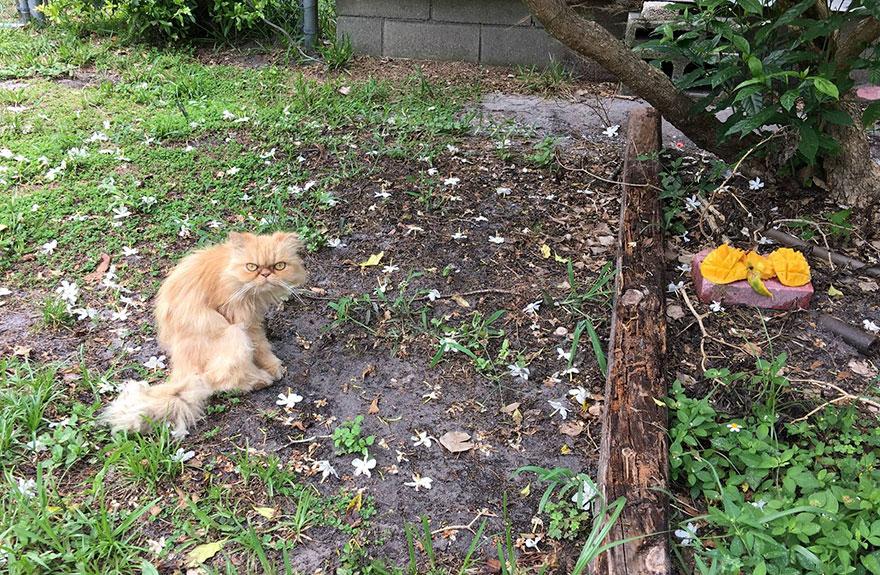 grumpy-cat-adopted-ginger-garfield-2