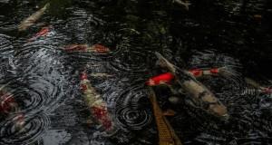 Emotional-some-views-of-Japans-rainy-season-576d1d650635f__880