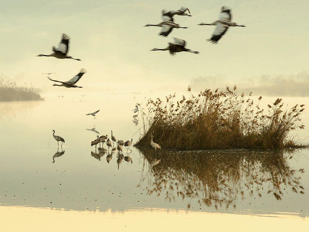 israel-lake-cranes_94412_990x742