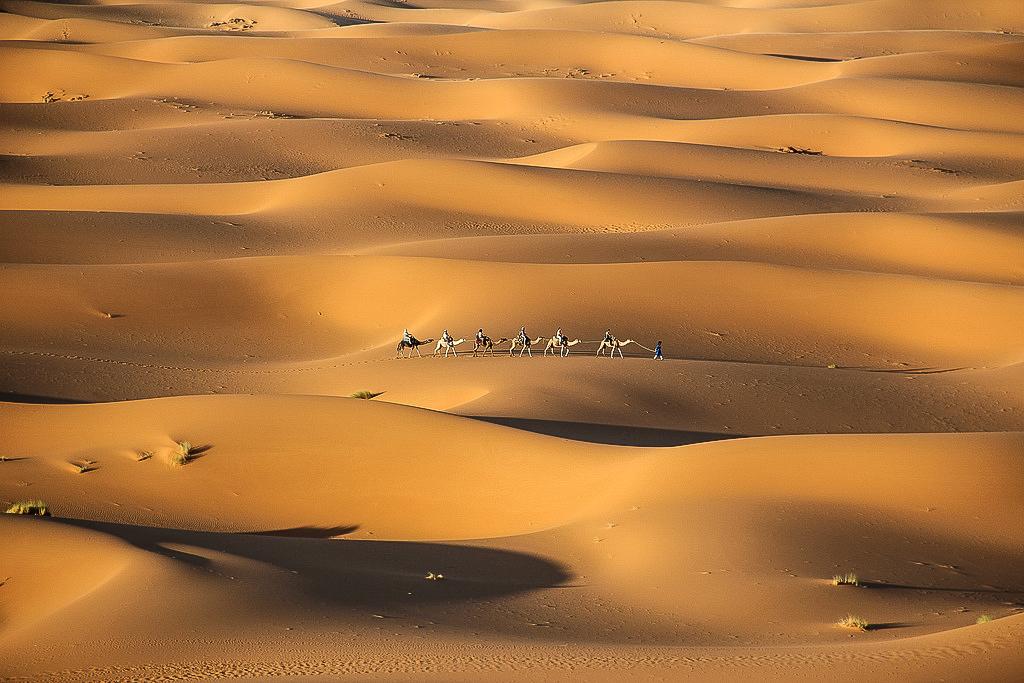 morocco-camels-matador-seo