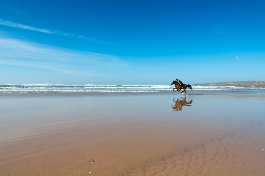 morocco-horse-matador-seo
