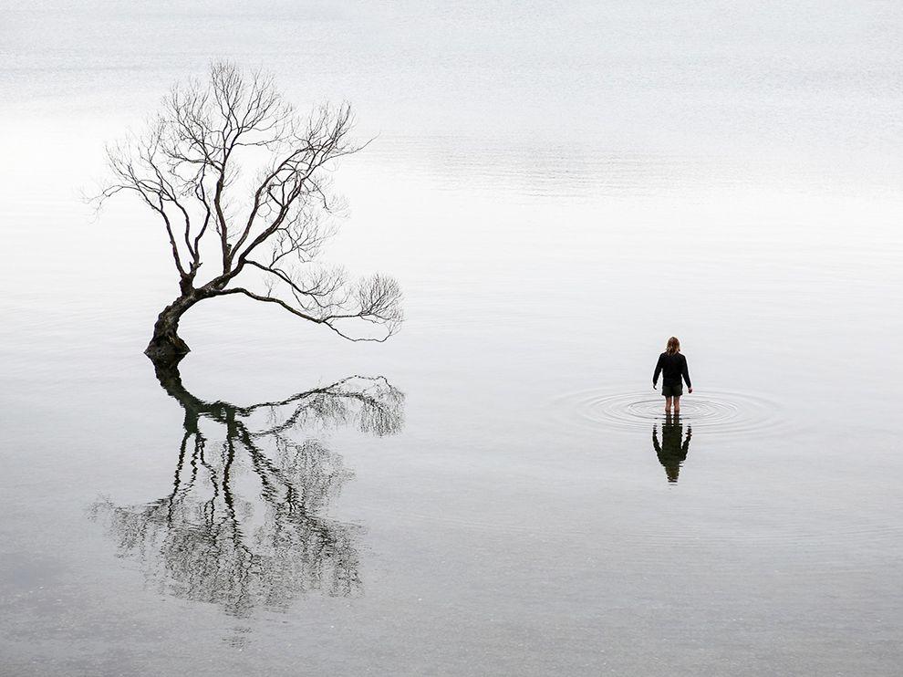 wanaka-tree-ngpc2015_92242_990x742