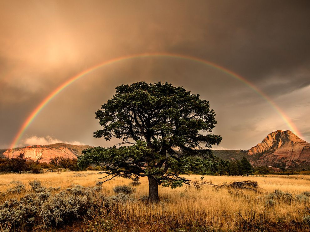 zion-rainbow_95308_990x742