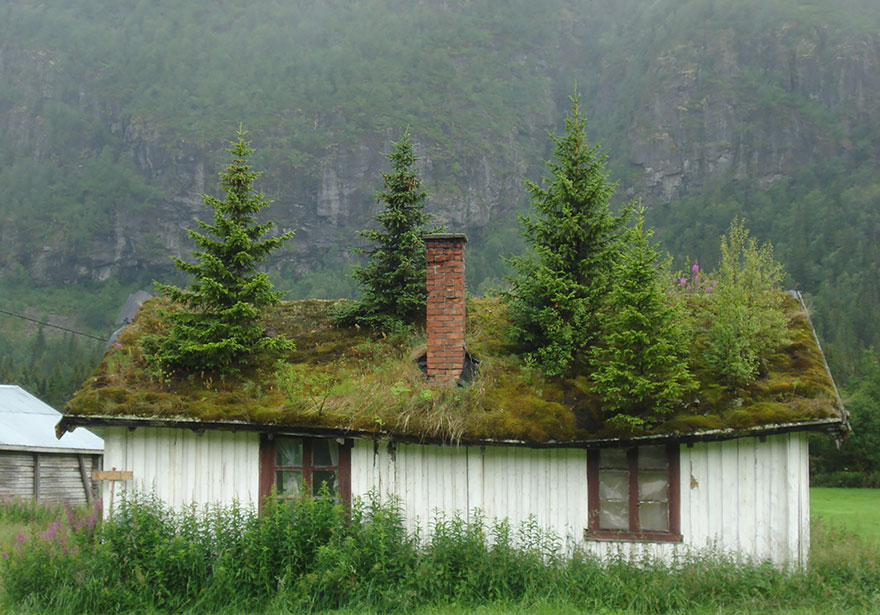 grass-roofs-scandinavia-22-575fe7005d0e1__880