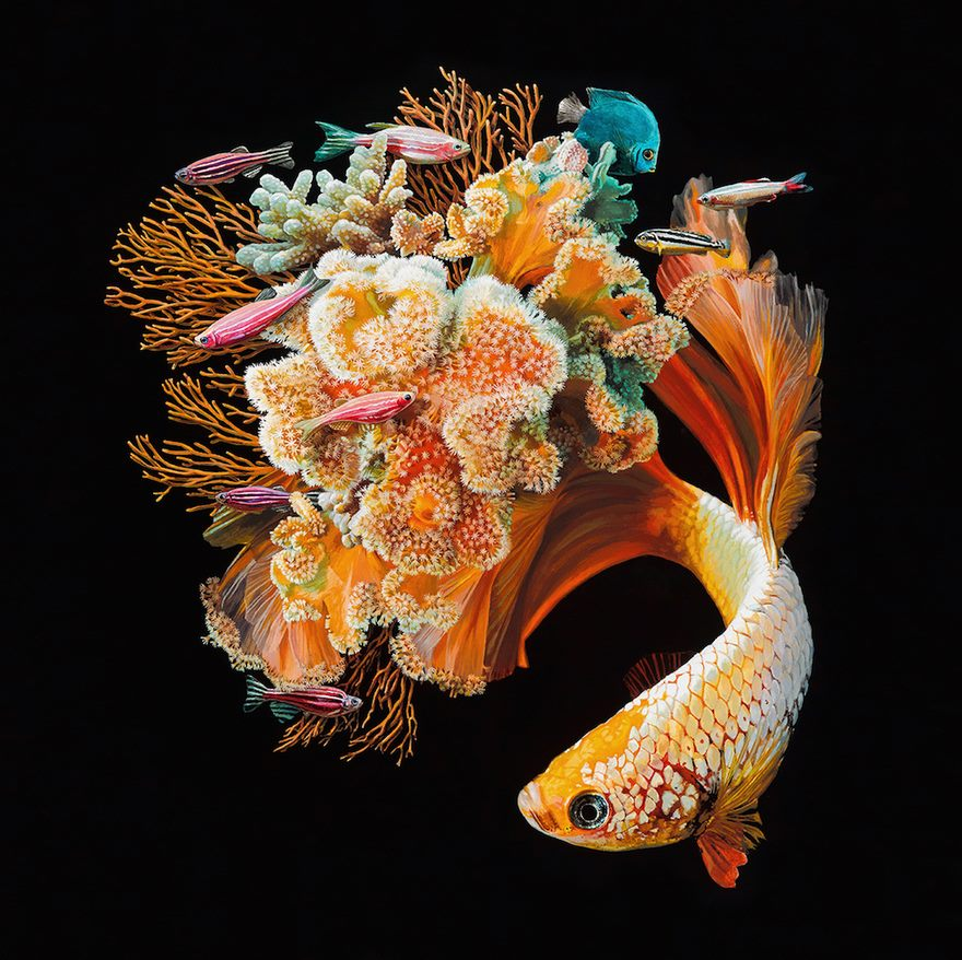 surreal-fish-art-lisa-ericson-5-58590102534e2__880