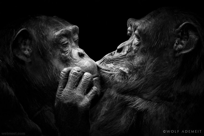 21-animal-kissing-black-and-white-photography-by-wolf-ademeit.preview