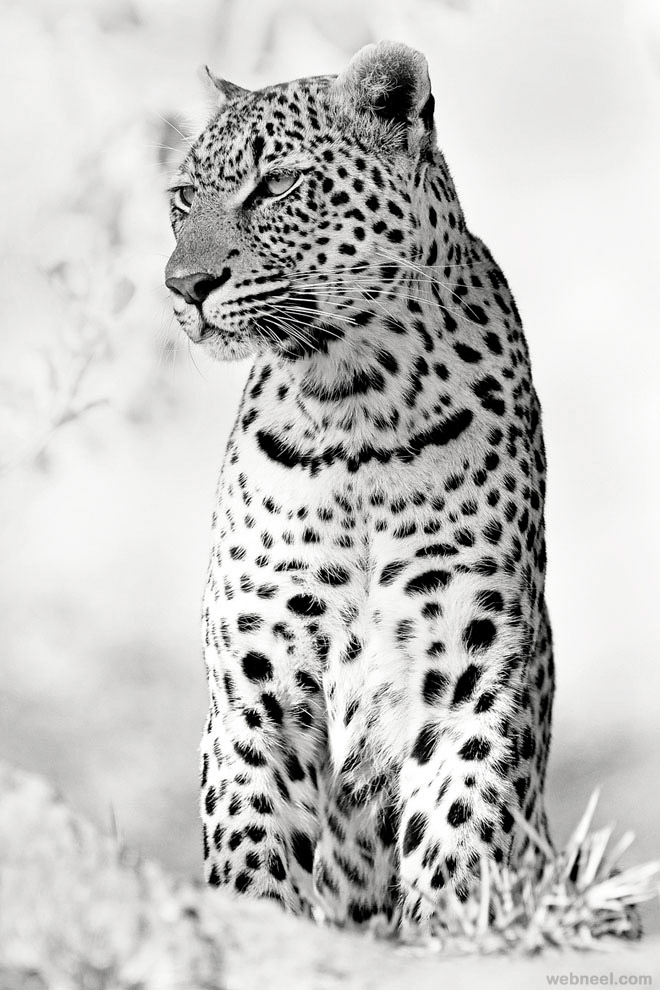 24-animal-black-and-white-photography-by-rudi-hulshof