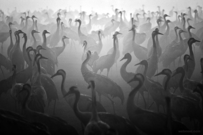 3-birds-black-and-white-photography-by-cohen.preview