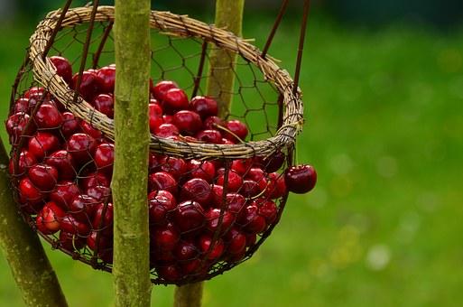 cherries-1503974__340