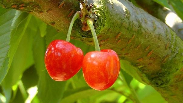 cherries-178148__340