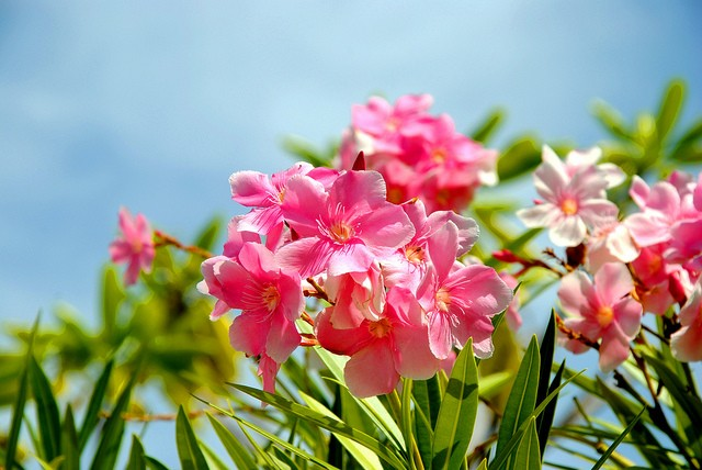 pink-flowers-in-field_blog131210