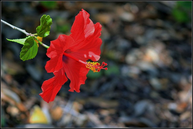 red-flower-extended_blog131210