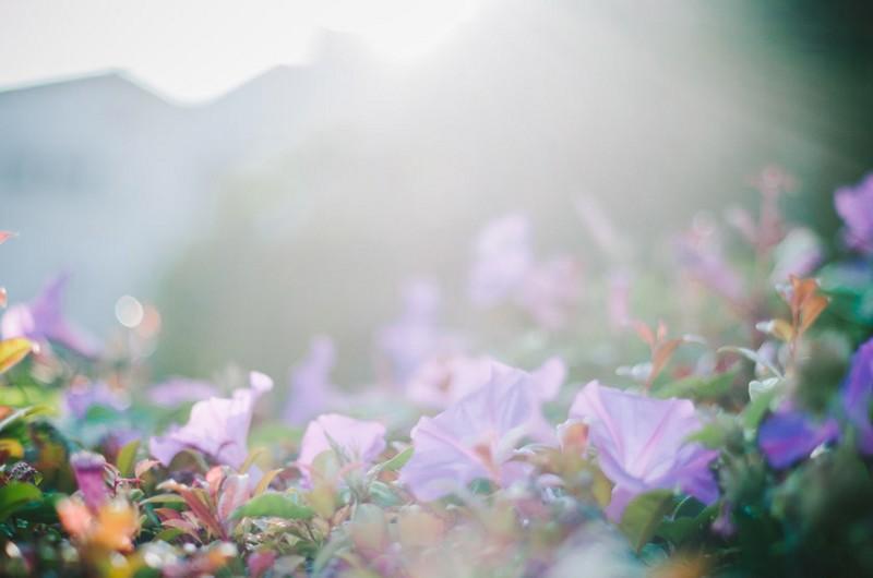wild flowers_blog131210