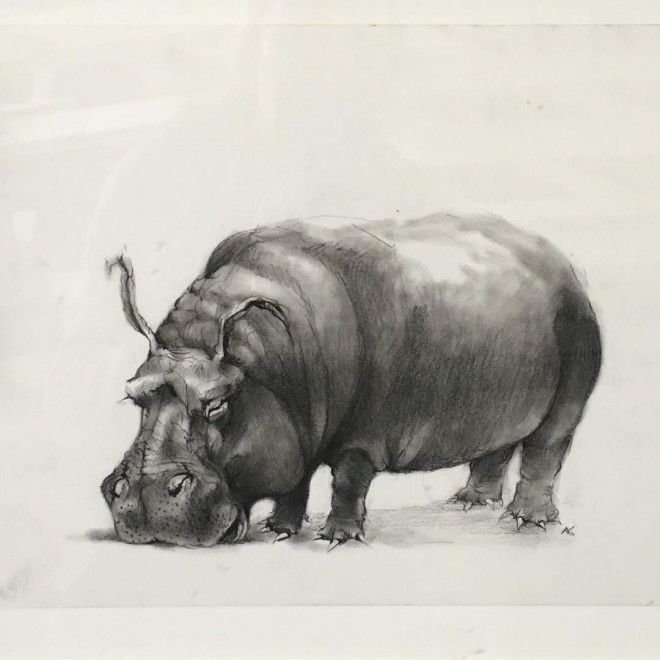 17-hippo-funny-drawing-by-adonna-khare.preview
