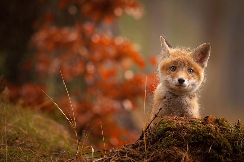 wildlife14