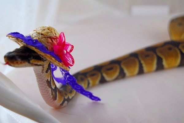 snakes-in-hats-12