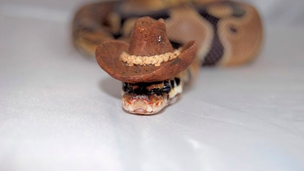snakes-in-hats-14