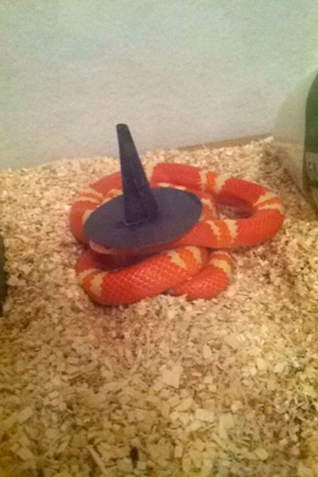 snakes-in-hats-5