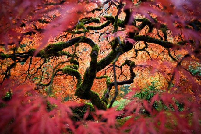 1-nature-photography-maple-tree-portland.preview