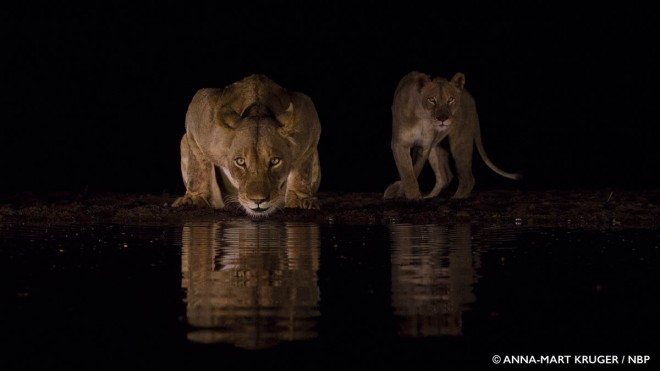 10-thirst-windland-awards-photography-by-anna-mart-kruger.preview (1)