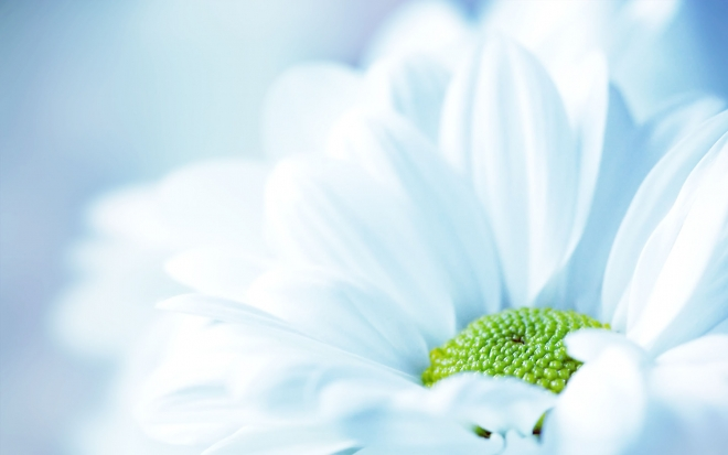 15-flower-wallpaper.preview