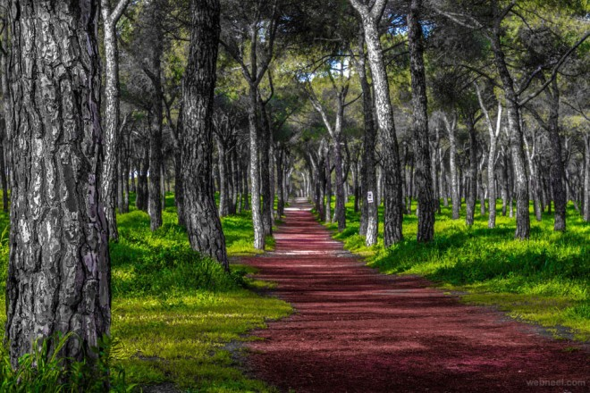 15-nature-photography-forest-by-jose-caballero.preview