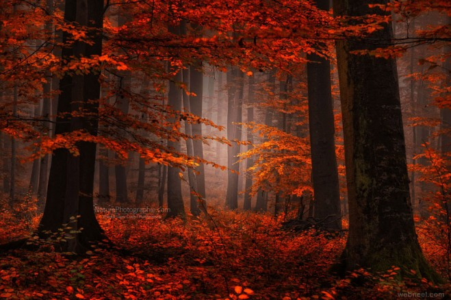 17-nature-photography-forest-by-philippe-sainte.preview