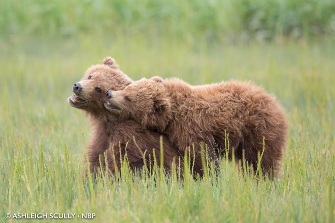 2-young-bears-windland-awards-photography-by-ashleigh-scully.preview