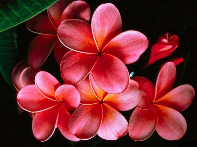 5-flower-wallpaper.preview