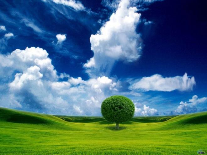 beautiful tree moynhsda.preview