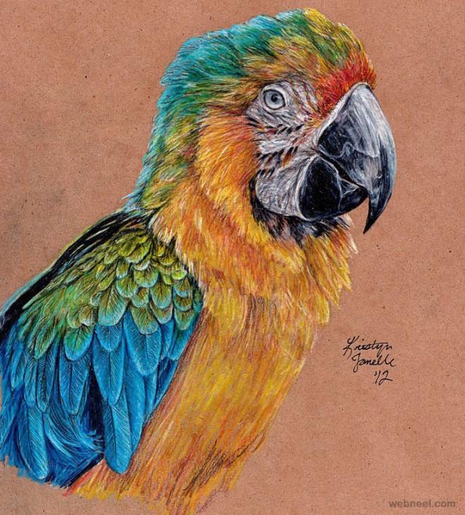 10-bird-color-pencil.preview