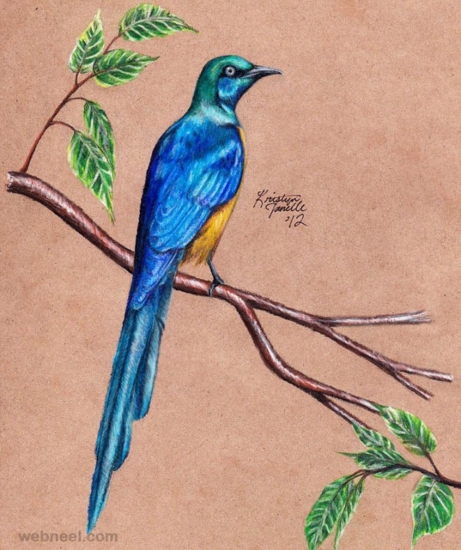 12-bird-drawing.preview