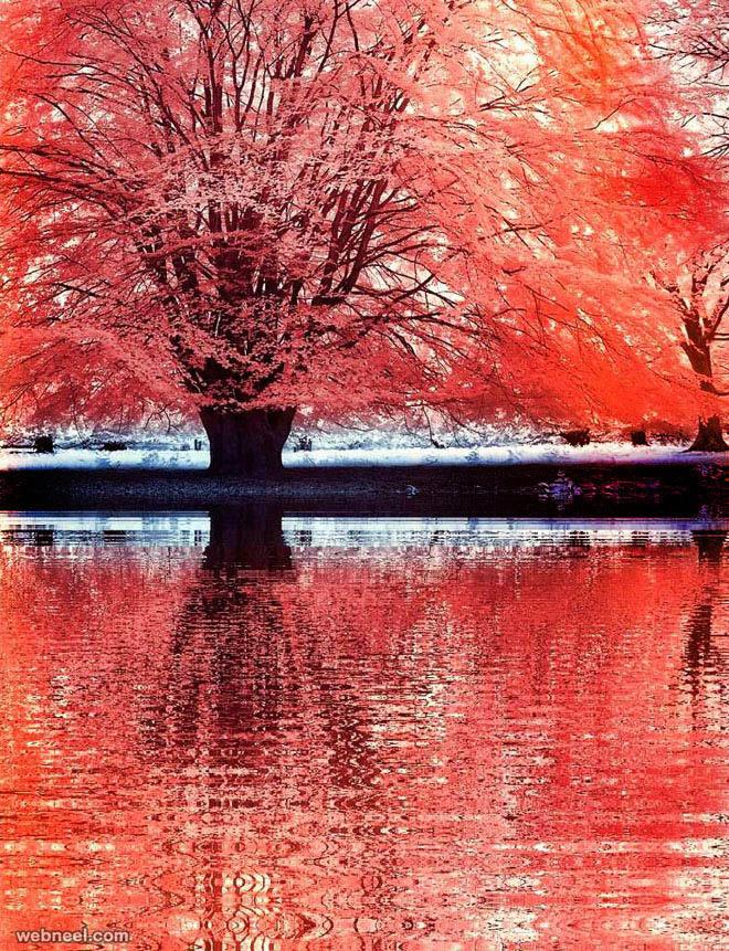 13-infrared-photography-michi-lauke