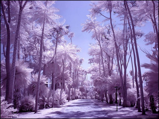 14-palm-infrared-photography-michi-lauke.preview