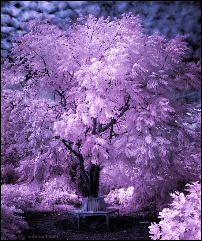 15-tree-infrared-photography-michi-lauke