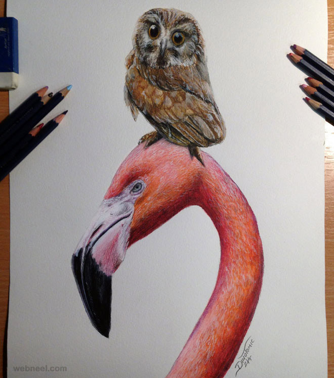 16-bird-colored-pencil