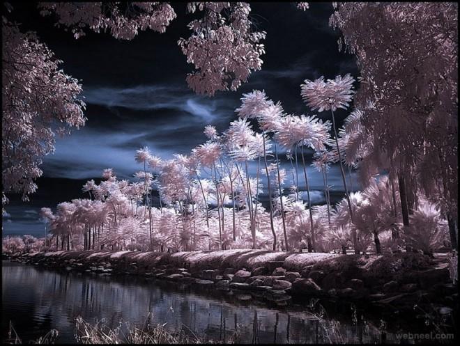 16-tropical-garden-infrared-photography.preview