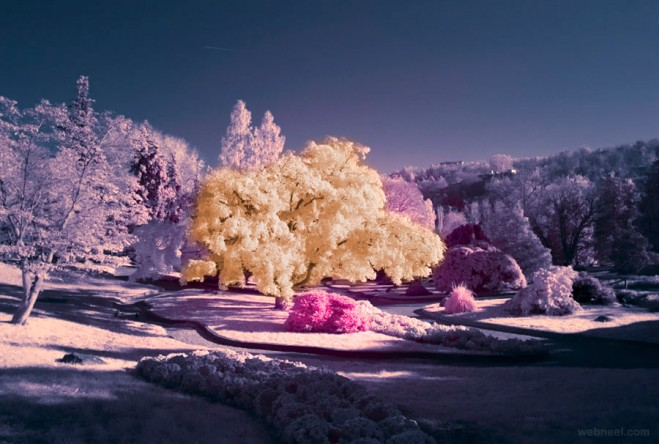 18-infrared-photography.preview