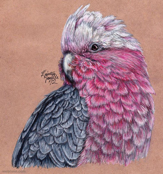 19-bird-color-pencil-drawing.preview