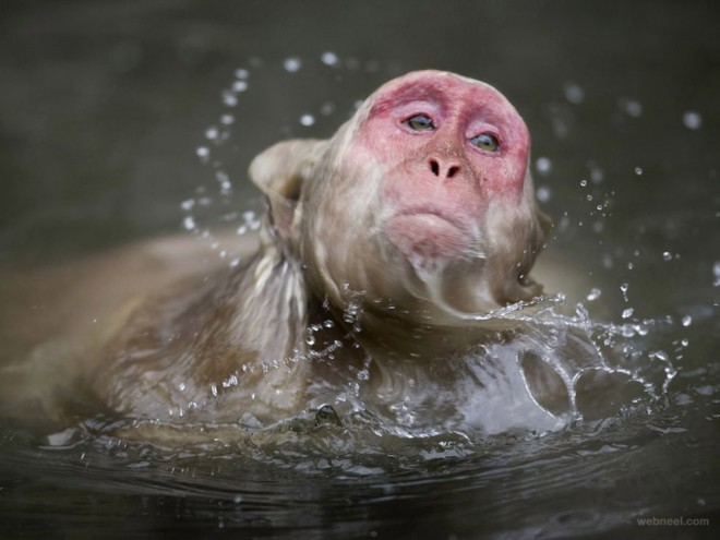 23-macaque-photography.preview