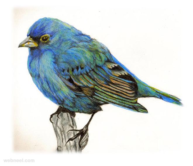 24-bird-drawing
